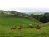 Colline du Cantal à Imbert